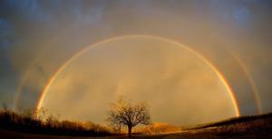 Tree double rainbow