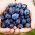 Can Blueberries Help Prevent Alzheimer's Disease?
