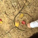 Nature Helps Children Relax, Reduce Hyperactivity